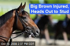 Big Brown Injured, Heads Out to Stud