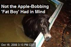 Not the Apple-Bobbing 'Fat Boy' Had in Mind
