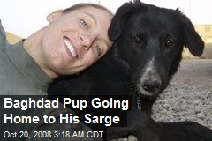 Baghdad Pup Going Home to His Sarge