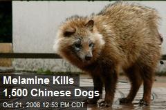 Melamine Kills 1,500 Chinese Dogs