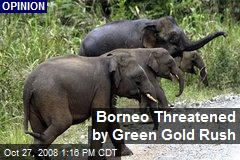 Borneo Threatened by Green Gold Rush