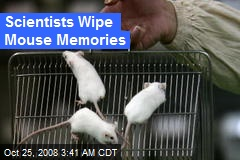 Scientists Wipe Mouse Memories