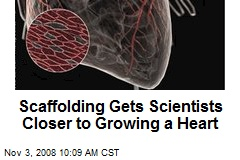 Scaffolding Gets Scientists Closer to Growing a Heart
