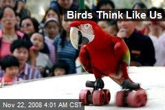 Birds Think Like Us