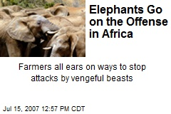 Elephants Go on the Offense in Africa