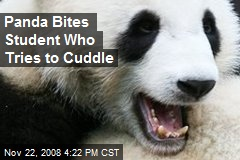 Panda Bites Student Who Tries to Cuddle