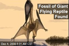 Fossil of Giant Flying Reptile Found