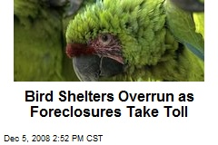 Bird Shelters Overrun as Foreclosures Take Toll