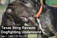 Texas Sting Reveals Dogfighting Underworld