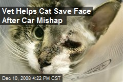 Vet Helps Cat Save Face After Car Mishap