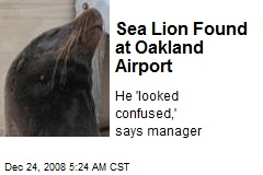 Sea Lion Found at Oakland Airport