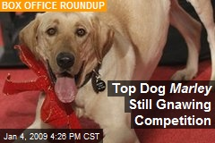 Top Dog Marley Still Gnawing Competition