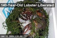 140-Year-Old Lobster Liberated