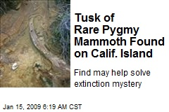 Tusk of Rare Pygmy Mammoth Found on Calif. Island