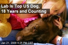 Lab Is Top US Dog, 18 Years and Counting