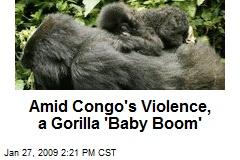 Amid Congo's Violence, a Gorilla 'Baby Boom'