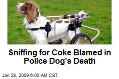 Sniffing for Coke Blamed in Police Dog's Death