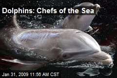 Dolphins: Chefs of the Sea