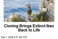 cloning animals could lead to the salvation of endangered species The low genetic diversity will lead to inbreeding depression and likely extinction  of the cloned population rewilding (release of animals raised in captivity into.