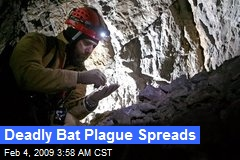Deadly Bat Plague Spreads