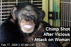 Chimp Shot After Vicious Attack on Woman