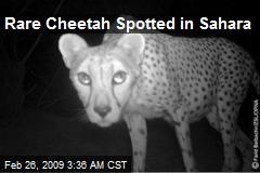 Rare Cheetah Spotted in Sahara