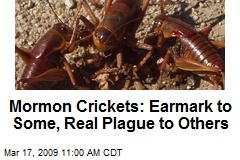 Mormon Crickets: Earmark to Some, Real Plague to Others