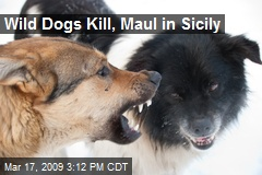 Wild Dogs Kill, Maul in Sicily