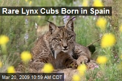 Rare Lynx Cubs Born in Spain