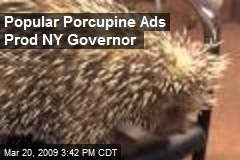 Popular Porcupine Ads Prod NY Governor