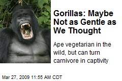 Gorillas: Maybe Not as Gentle as We Thought