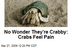 No Wonder They're Crabby: Crabs Feel Pain