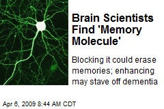 Brain Scientists Find 'Memory Molecule'