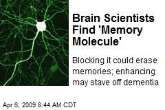 Brain Scientists Find 'Memory Molecule'