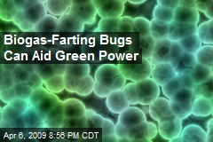 Biogas-Farting Bugs Can Aid Green Power