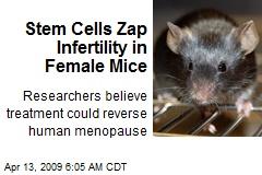 Stem Cells Zap Infertility in Female Mice