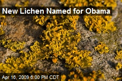 New Lichen Named for Obama