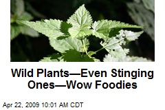 Wild Plants—Even Stinging Ones—Wow Foodies