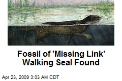 Fossil of 'Missing Link' Walking Seal Found
