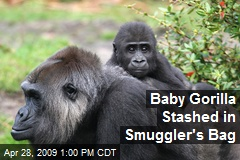 Baby Gorilla Stashed in Smuggler's Bag