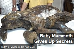 Baby Mammoth Gives Up Secrets