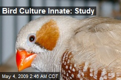 Bird Culture Innate: Study