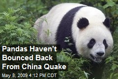 Pandas Haven't Bounced Back From China Quake
