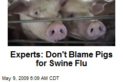 Experts: Don't Blame Pigs for Swine Flu