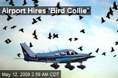 Airport Hires 'Bird Collie'