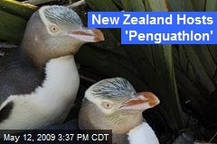New Zealand Hosts 'Penguathlon'