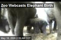 Zoo Webcasts Elephant Birth