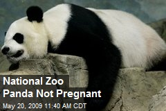 National Zoo Panda Not Pregnant