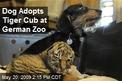 Dog Adopts Tiger Cub at German Zoo