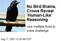No Bird Brains, Crows Reveal 'Human-Like' Reasoning